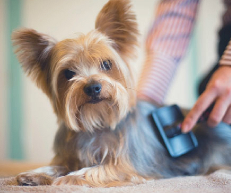 How To Prepare Your Puppy Dog For Brushing