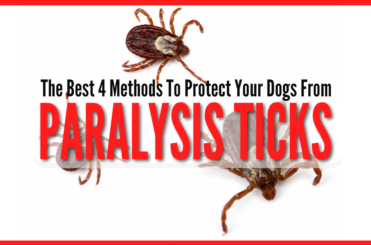 4 Methods to Protect Your Dog From Paralysis Ticks