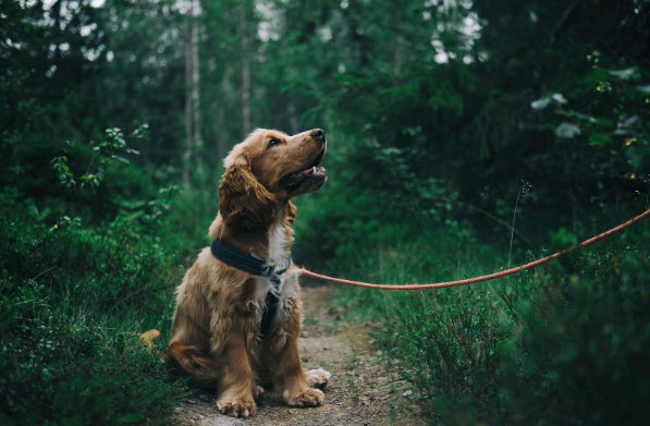 What to look for in a dog flea treatment comparison
