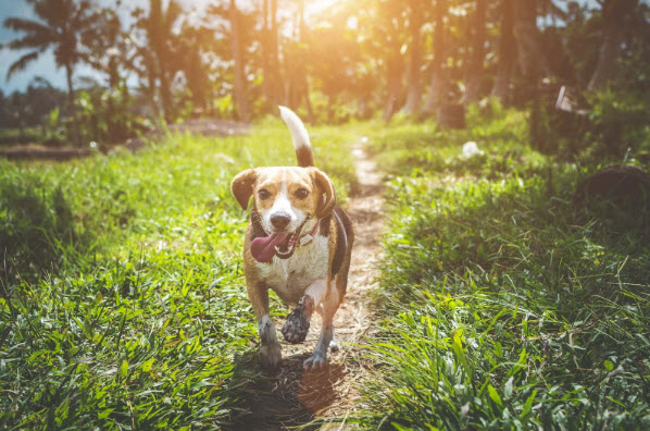 Is your dog a home for unwanted tick and flea guests?