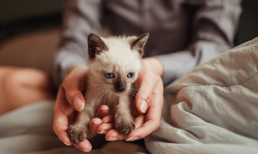 New Kitten - The Right Choice For You