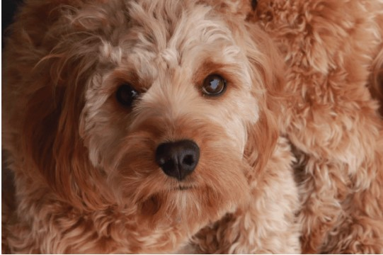 5 Common Causes of Itching in Pets