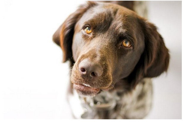 Fear Or Phobia In Dogs