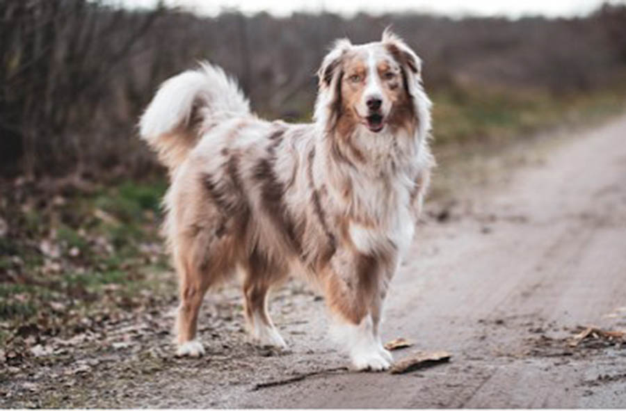 Essential Products For Dog Breeds - Vet Products Direct