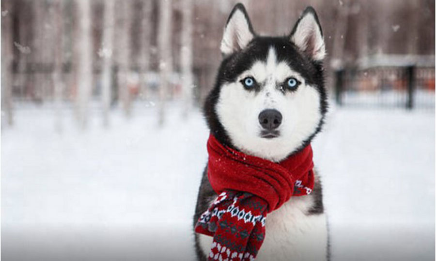 How To Help Your Pet This Winter