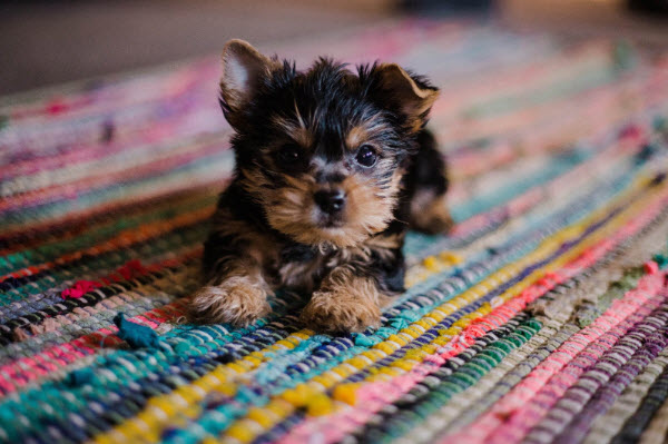 Dog in colored mat
