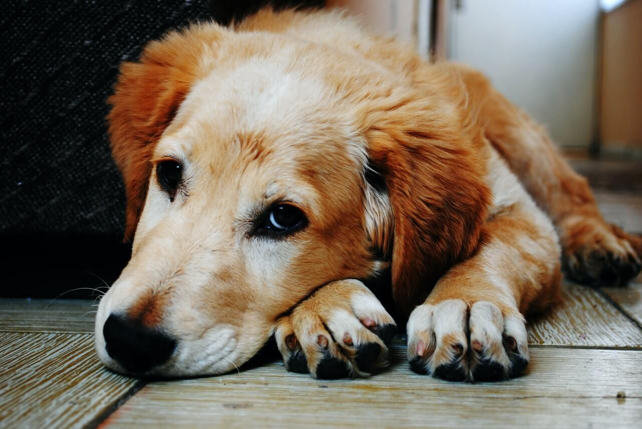 Creative ways to deliver fleas and ticks treatments to the household pets