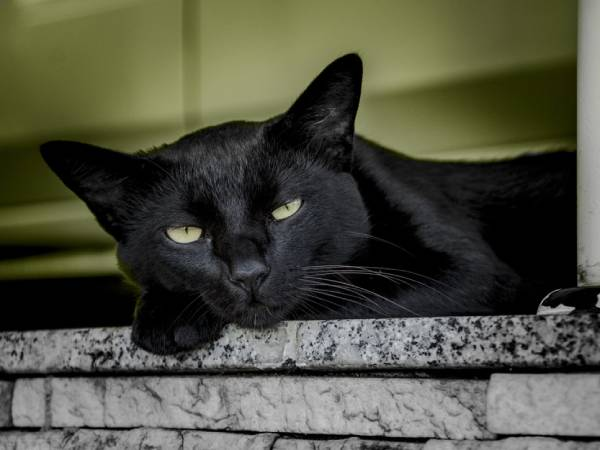 A black cat is resting on a stone ledge with a green wall behind them